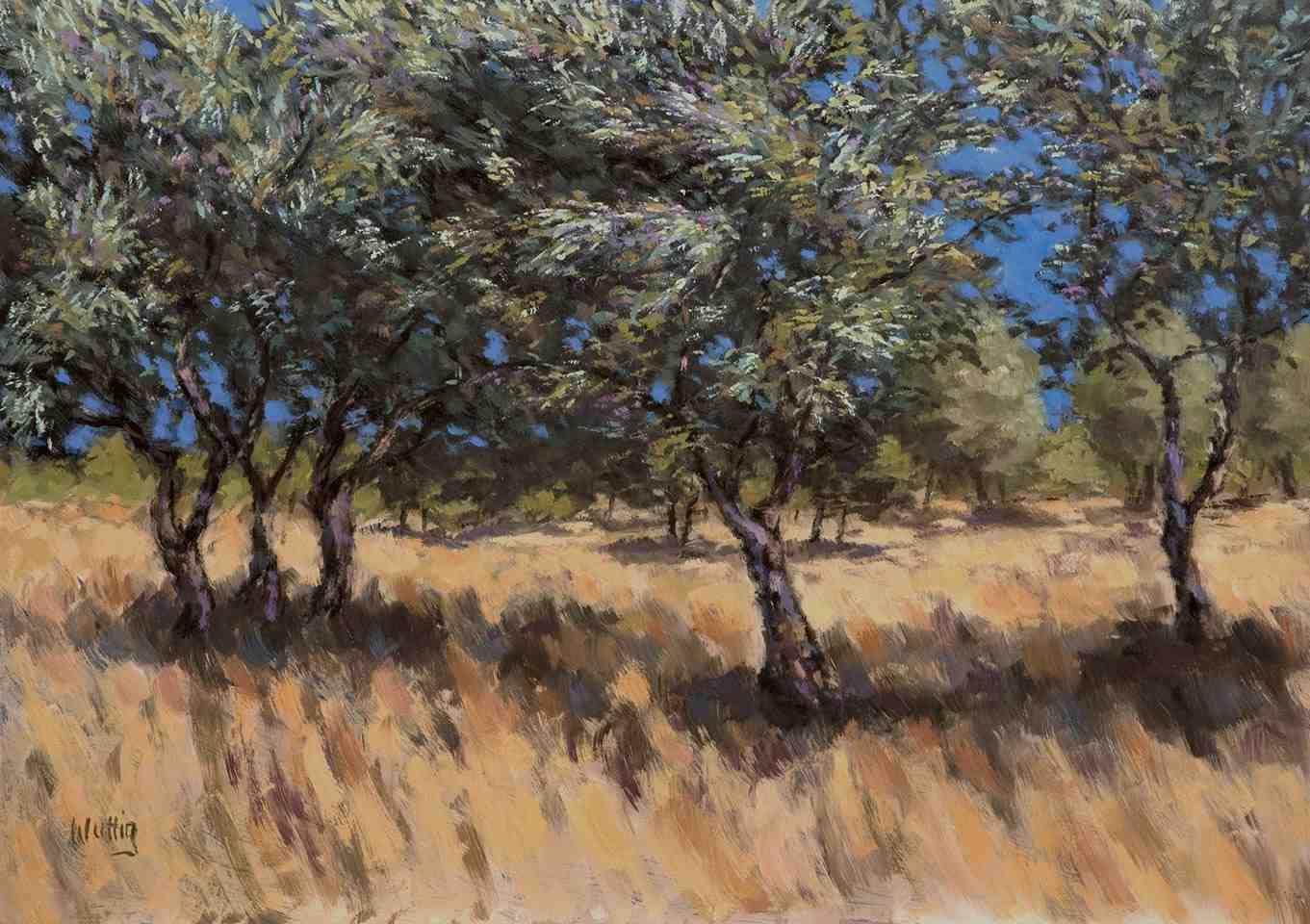 Wild olive grove